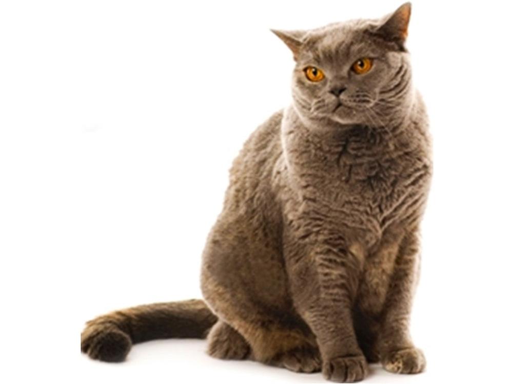 БИСКО для кошек