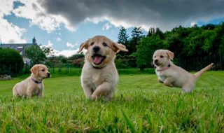 "Корм ""Bisko"" для щенков"