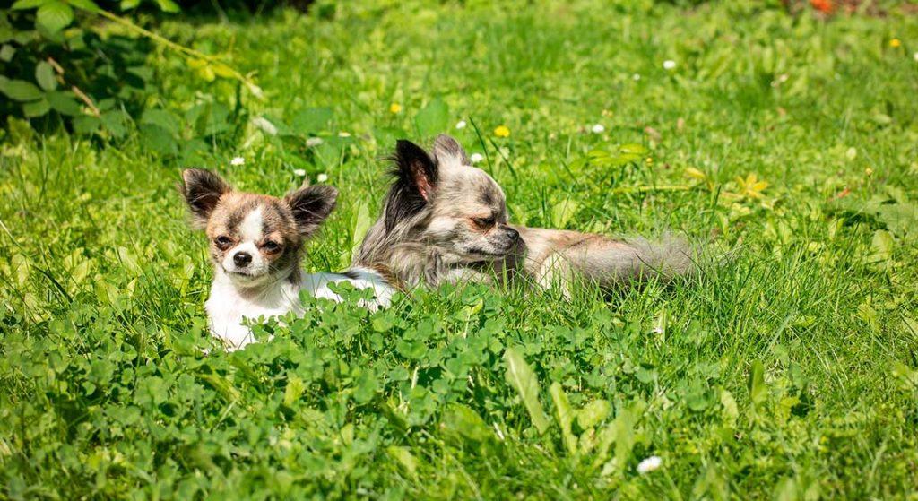Сухой корм «Bisko» для беременных и кормящих собак крупных и средних пород