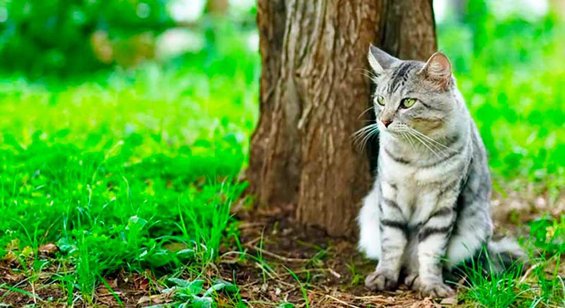 Сухой корм «Bisko» для кошек