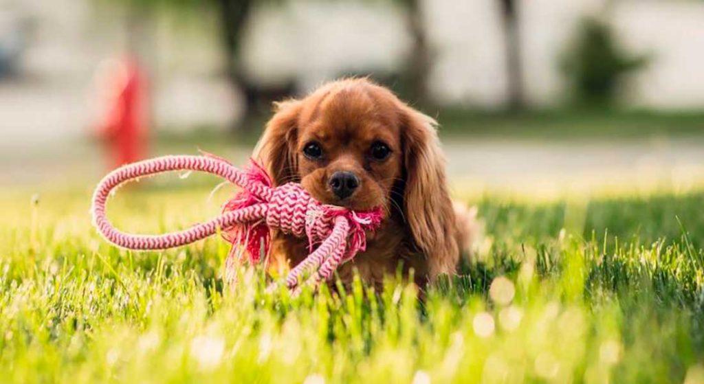 Сухой корм «Bisko» для взрослых собак мелких пород