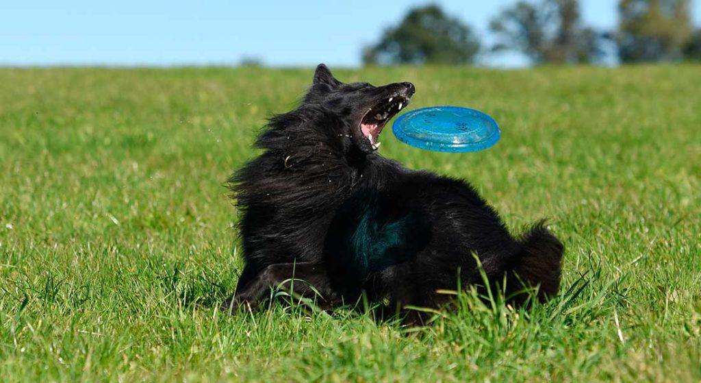 Корм «Bisko» премиум класса для взрослых собак
